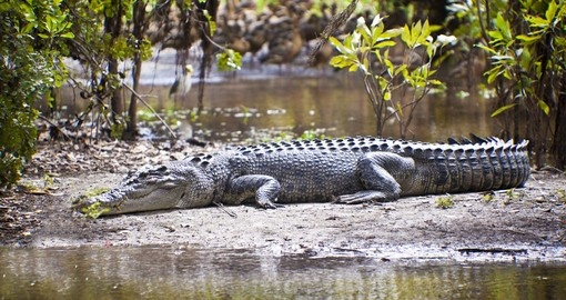 You might see Crocodile in Yellow water billabong during your next Australia Vacation.
