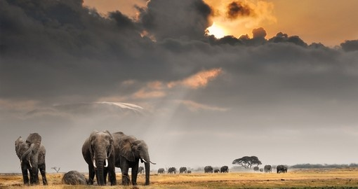 See the Big 5 including Elephants as your Tanzania Safari visits Amboseli National Park