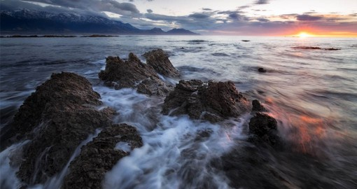 The strong ocean-currents at Kaikoura are ideal conditions for marine mammals