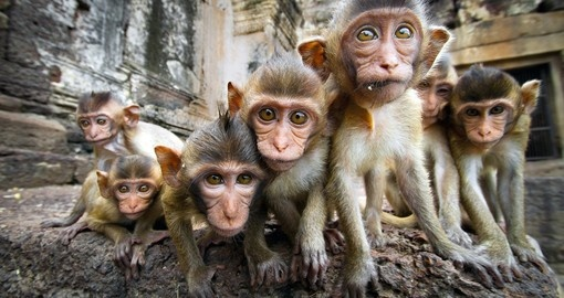 A Group of Baby Monkeys in Thailand
