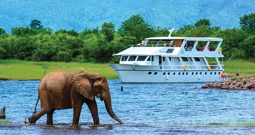 Game viewing Lake Kariba, Africa