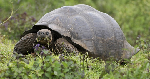 Spot local wildlife on your Galapagos Cruise