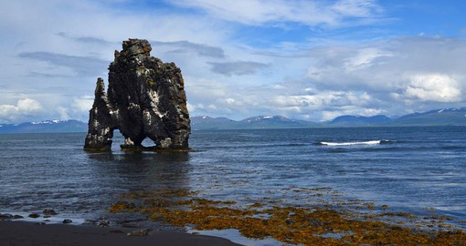 Hvitserkur is a beautiful cliff where many types of seabirds, especially gulls and fulmars, have made their nests for centuries