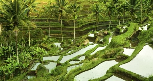 See the terrace rice fields in Ubud during your Indonesia trip.