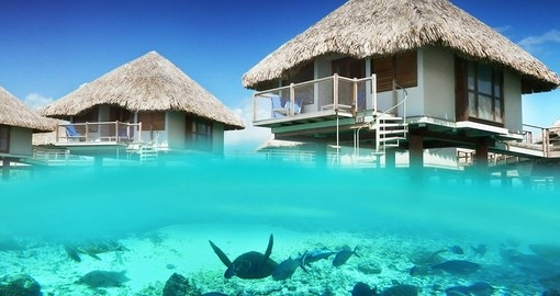 Le Meridien Bora Bora has an onsite turtle sanctuary which is easily accessible during your Trip to Bora Bora.