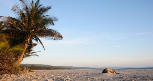 Palm tree on beach in Mozambique