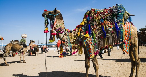Pushkar Camel Fair