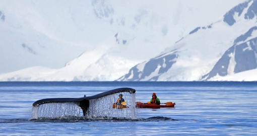 Ocean Endeavour is designed to get you close Antarctica's teasures