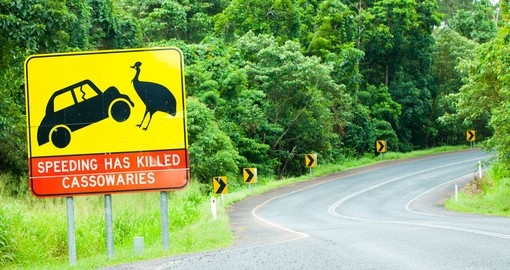 A cassowary road warning sign near Mission Beach