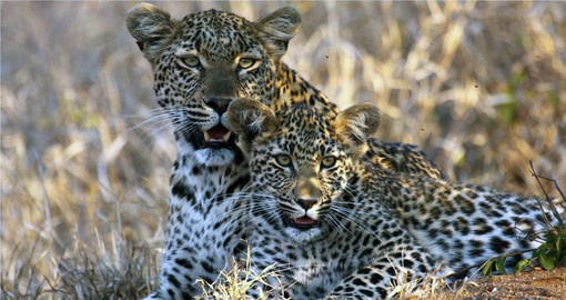 A South African Safari in Kruger National Park is part of your trip to South Africa