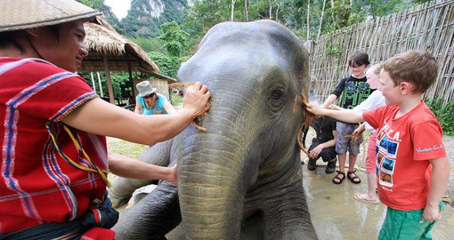 Enjoy an interactive Elephant experience!