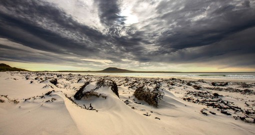 The Falkland Islands are one of the last great wilderness destinations