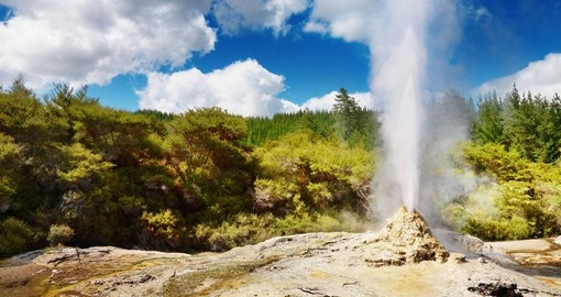 "See Lady Knox geyser ""spouting off"" in Rotorua - a must inclusion for all New Zealand tours."
