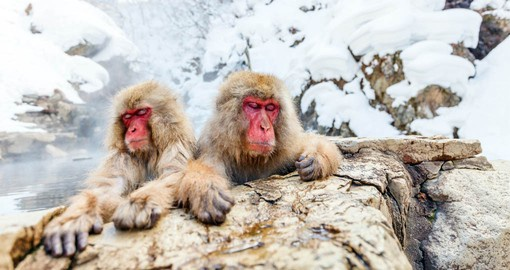 In winter Japanese macaques, also known as snow monkeys, warm up in natural hot springs