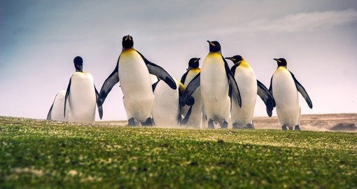 King Penguins are a popular photo opportunity during your Falklands Vacation