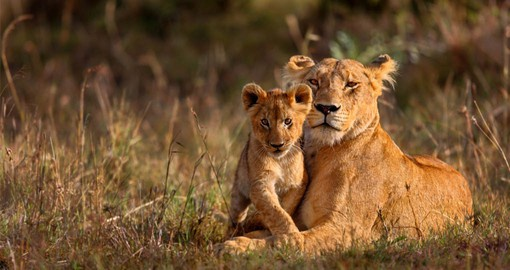 The Masai Mara National Reserve is one of Africa's greatest National Parks