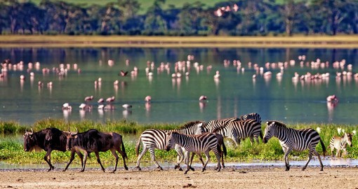 Established in 1959, The Ngorongoro Conservation Area covers 8,292 square kilometres