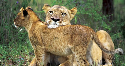Kapama Game Reserve is home to over 40 species of mammals including the Big 5