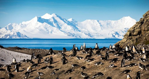 The beautiful South Shetland Islands are major breeding grounds for penguins and seals