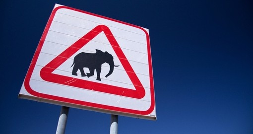 Caution Elephants, Southern Africa