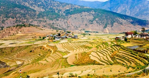 A Bhutanese village and terraced field