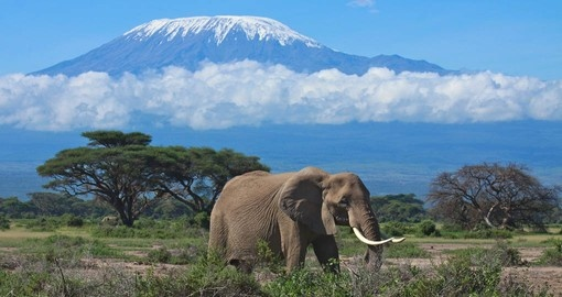 Africa's majestic Mount Kilimanjaro - always a highlight on African vacations.