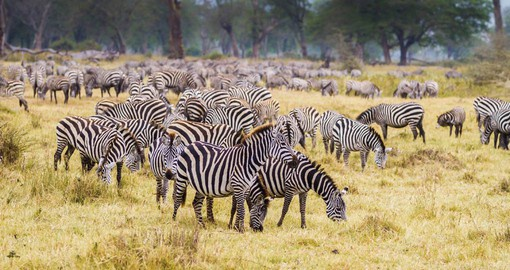 Serengeti National Park has the greatest concentration of plains game in Africa