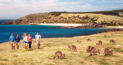 Kangaroos at Stokes Bay, Kangaroo Island.  Image Courtesy of Paul Torcello and the SATC