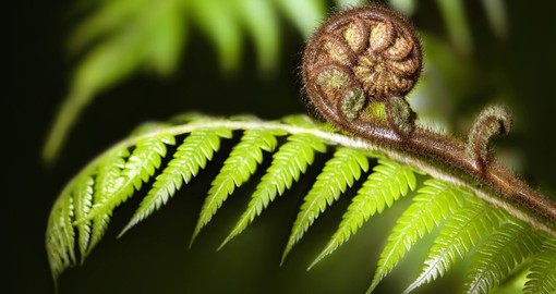The iconic fern, the Koru, will be seen throughout your New Zealand vacation